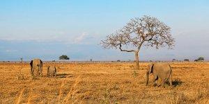 Karibuni Tanzania (12dni)