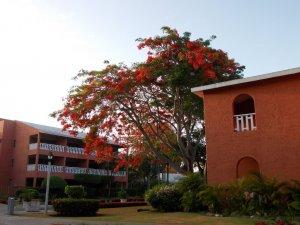 Hotel Dominican Bay