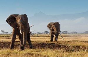 Kilimandżaro - Amboseli - safari dla odkrywców